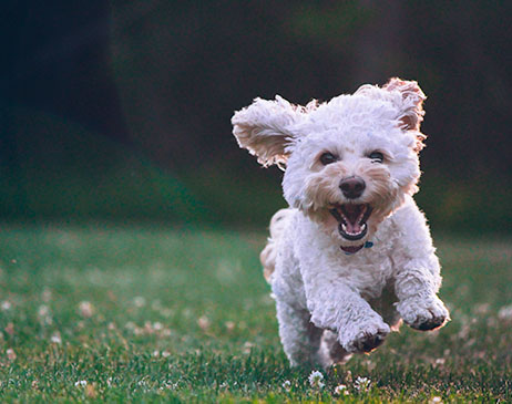 Dog acting as the perfect running buddy